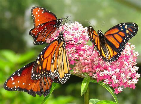 Minnesota Zoo Gift Card - butterflys pahl s market apple valley mn