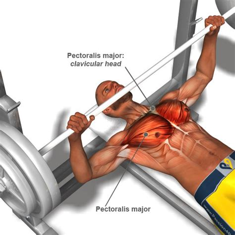 queries regarding building and fitness chest workout
