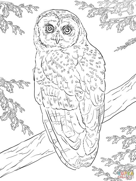 spotted owl coloring page northern spotted owl coloring page free printable