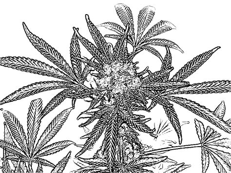 cool coloring books cannabis cool coloring book pages color pages