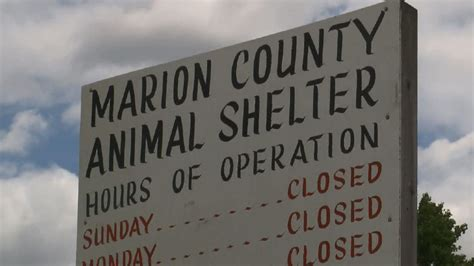 marion county pound marion county hires new director for animal shelter wpde