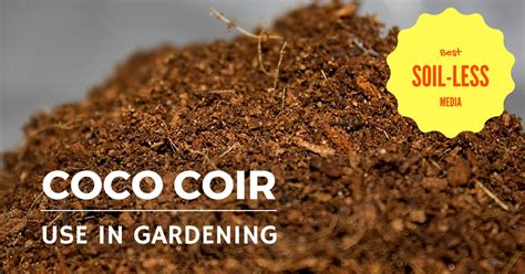coco coir coco coir extraction processing and its use in gardening