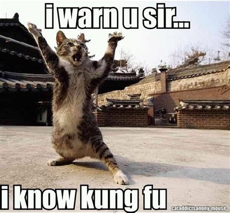 Meme Kung Fu - i know kung fu i love furry little critters pinterest