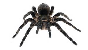 kansas woman charged with arson after trying to light a spider on fire