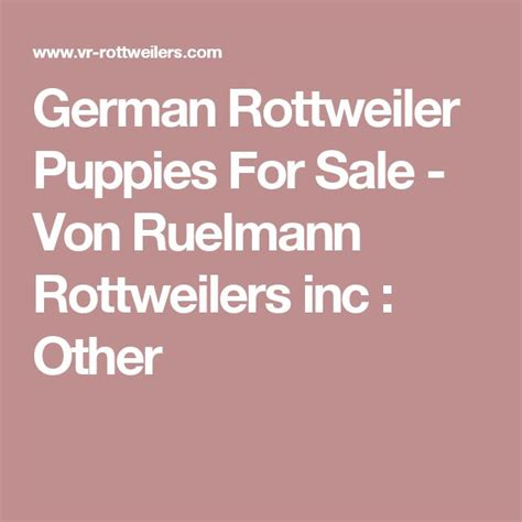 rottweiler puppies for sale in harrisburg pa 1000 ideas about rottweiler puppies for sale on german rottweiler german
