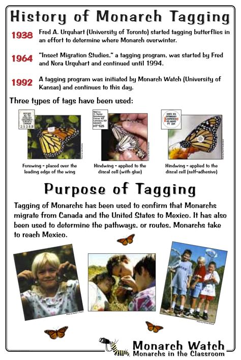 monarch watch migration tagging tagging monarch watch butterfly tagging program celebrates 20
