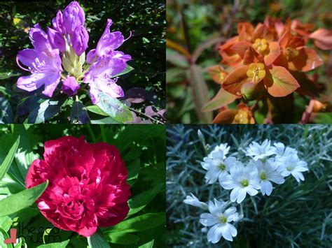 Flower Muslim summer garden flowers photograph can you recognise these s