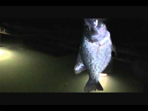 crappie lights for night fishing summer night crappie fishing youtube