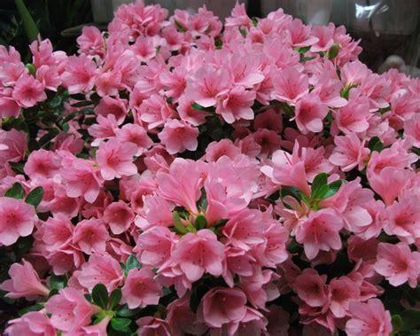 fiori da regalare alla mamma i fiori da regalare alla vostra mamma sanremofiorita