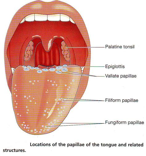 taste sections of tongue 301 moved permanently