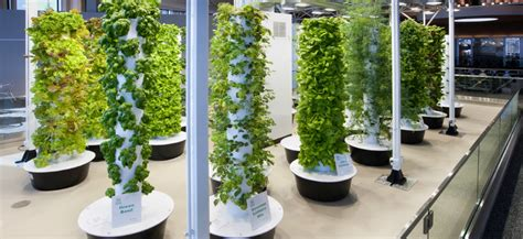 aeroponic stuck at the airport