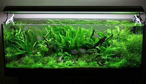 Planter Fish Tank by 4 Tips For Arranging Plants In A Freshwater Aquarium