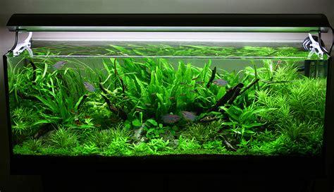 aquarium design techniques 4 tips for arranging plants in a freshwater aquarium