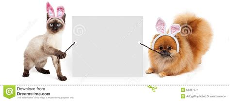 pomeranian cat easter and cat holding up banner stock photo image 54367772