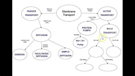 answers membrane transport concept map mind