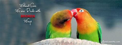 quotes about love and birds quotesgram love bird quotes quotesgram