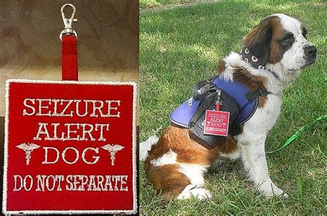 epilepsy service dogs seizure alert do not separate clip on tag for vest seizures and epilepsy
