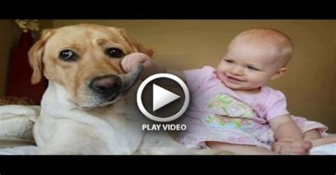 babies laughing at dogs babies laughing hysterically at dogs compilation from the coolest one