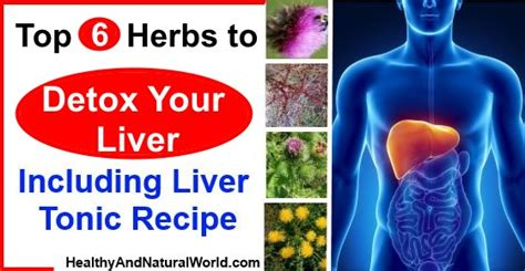 Best Herbs To Detox Gthe Liver by Top 6 Herbs To Detox Your Liver Including Liver Tonic Recipe