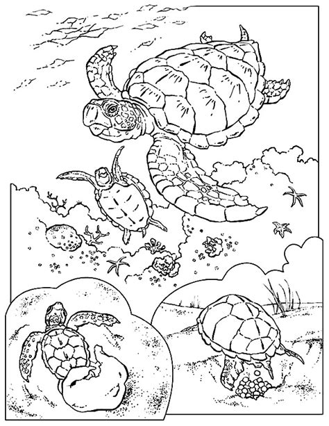 leatherback turtle coloring page leatherback sea turtle coloring sheet coloring pages