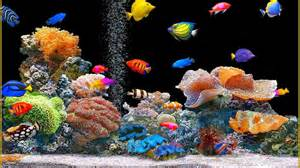 All For Color Lap Desk Animated Fish Tank Wallpaper Wallpaper Animated