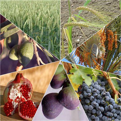 7 fruits of israel seven species