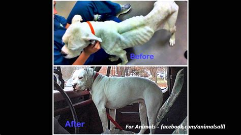 before and after getting your puppy before after rescue transformations