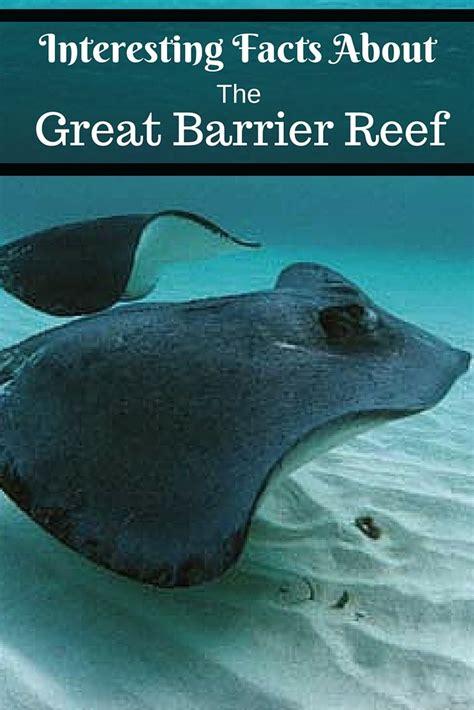 45 best marine biology images on marine