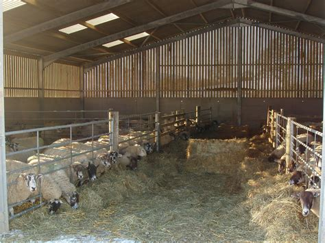 Sheep Lambing Sheds by March 2011 Farm Update Lambing Calving Trials And