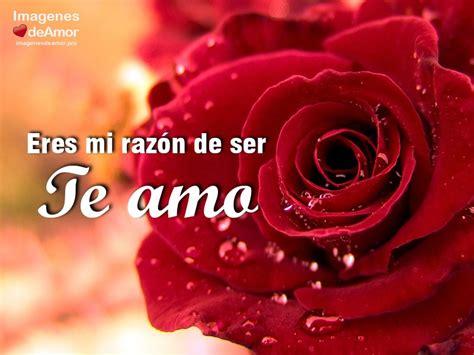 imagenes amor vida 10 im 225 genes de rosas para decir te amo al amor de tu vida