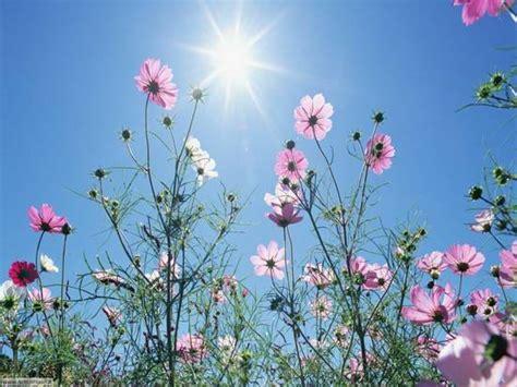 fiori primaverili foto fiori primaverili dall album foto profilo di urasina