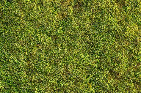 algen im rasen 4828 algen im rasen algen im rasen algen auf bodenplatten