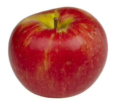 apple germany honeycrisp wikipedia