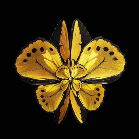 insects wings   manipulated    blooming