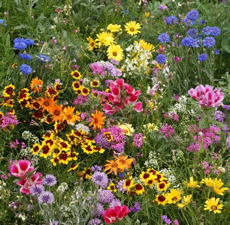 perennial mixture flower seeds large pack