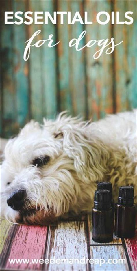 aromatherapy for dogs essential oils for dogs