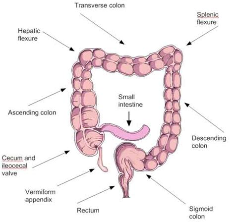 sections of colon understanding the colon intestinal cleansing natural