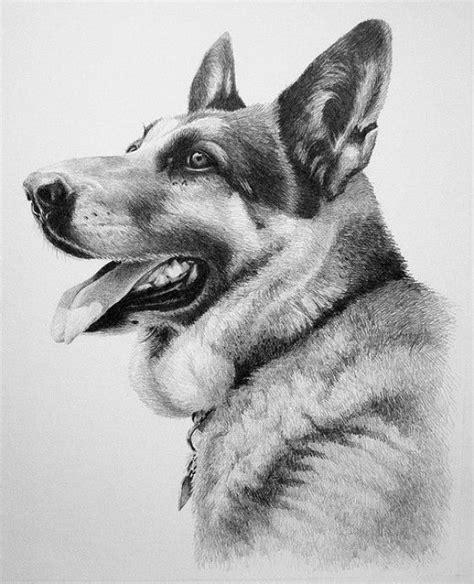 dibujos realistas animales dibujo de pastor aleman a lapiz drawing pinterest