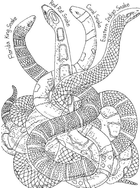 free coloring page snake snake pictures coloring pages for kids