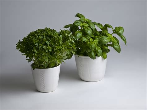 Herb Planters For Kitchen by Must Read Herb Planters Kitchen Sourcebook