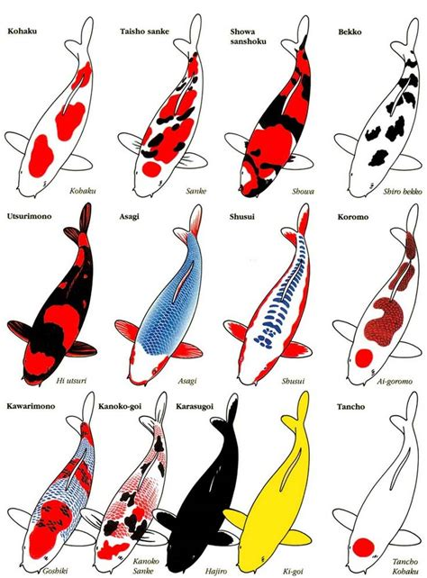 koi colors 13 variety of koi and their classifications