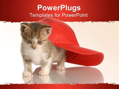 Powerpoint Template White And Red Background With Cat Under Red Face Cap 1817 Cat Powerpoint Template