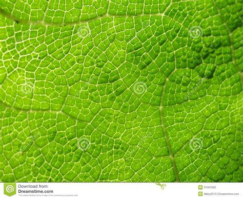 pattern bush in leaf green macro of cell pattern in large green leaf stock
