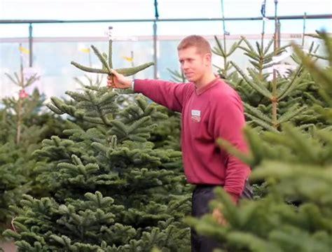 best 28 real christmas trees newcastle christmas tree