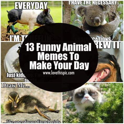 Funny Memes To Make - 13 funny animal memes to make your day