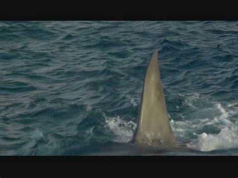 jaws banana boat attack gff jaws the revenge ending reedit youtube