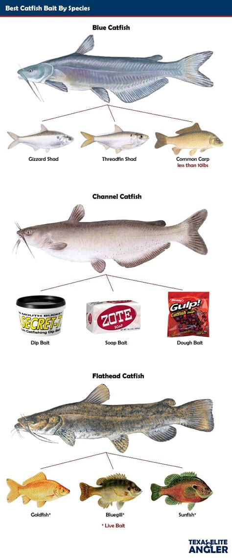 catfish bait 25 best ideas about catfish bait on best bait for catfish fishing tips