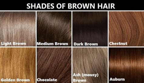 brown hair color chart brown hair color chart medium brown hair colour chart coloring hair color reference chart it s not but from what i could gather it s pretty accurate