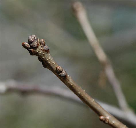 field biology in southeastern ohio march 2012