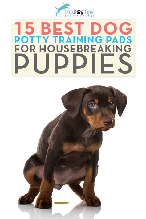 dog house training pads 1000 images about puppy training 101 on pinterest